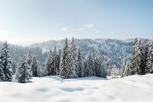 Snow-covered landscape and evergreens in Germany - gettyimageskorea