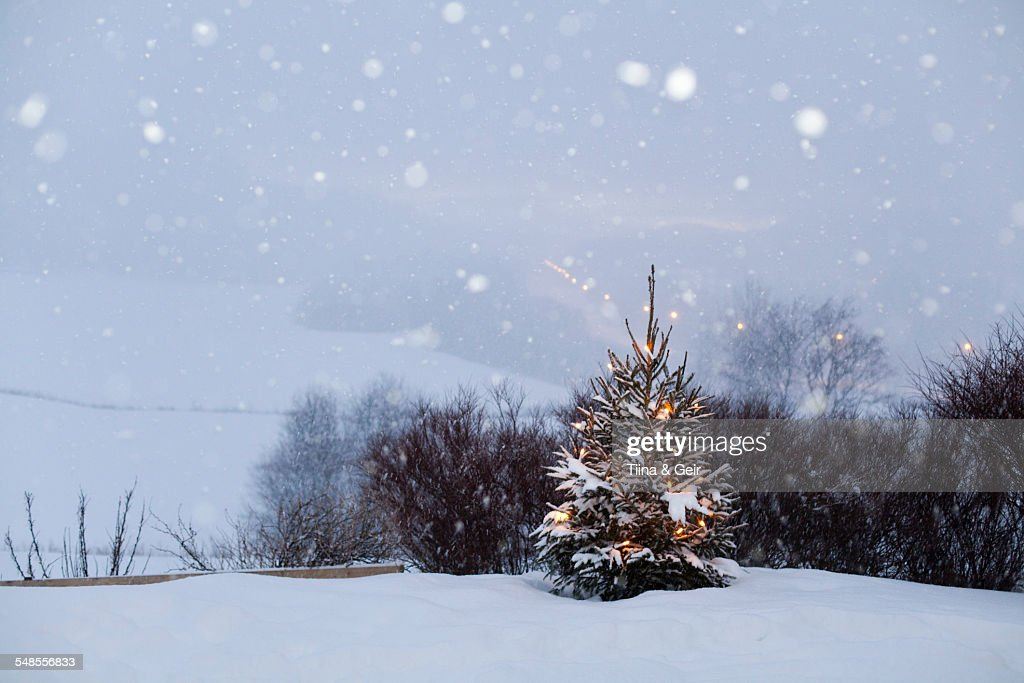 Snow-covered landscape, Trondheim, Norway : Stock Photo