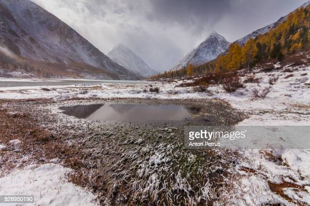 Snow-covered mountain peaks and golden larch in autumn