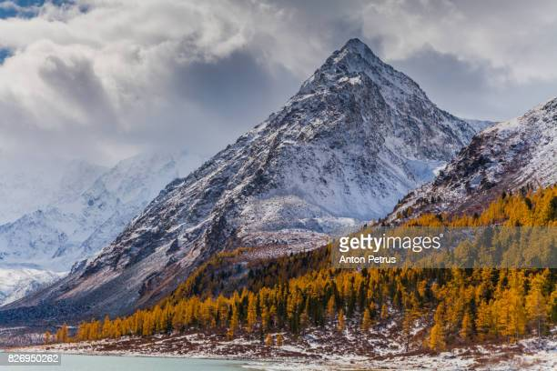 snow-covered mountain peaks and golden larch in autumn - kananaskis country stock pictures, royalty-free photos & images