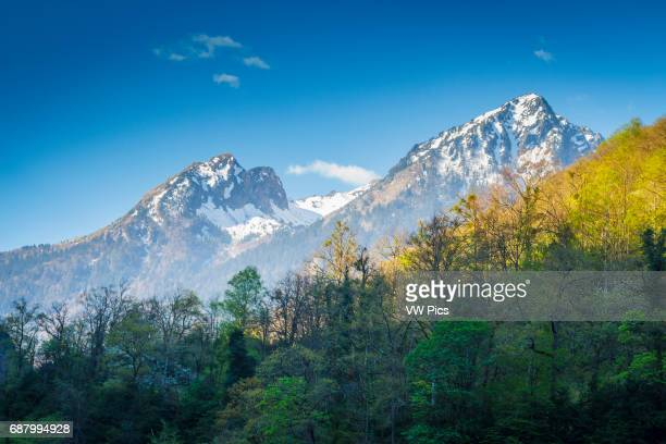 Snow-covered mountains and deciduous forest. Hautes-Pyrenees department, Midi-Pyrenees region, France, Europe.