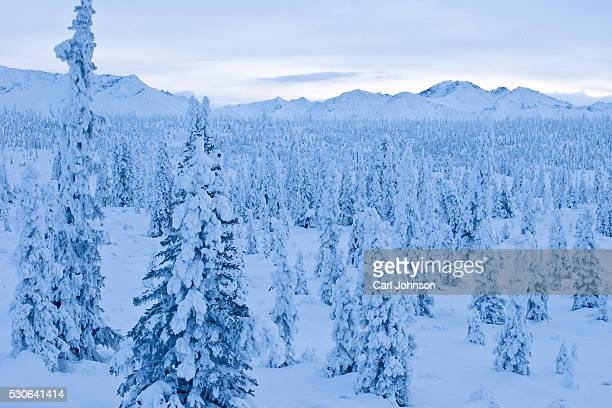 snow-covered spruce trees line the highway near gunsight mountain along the glenn highway above matanuska-susitna valley, southcentral alaska, winter - mt. susitna stock pictures, royalty-free photos & images