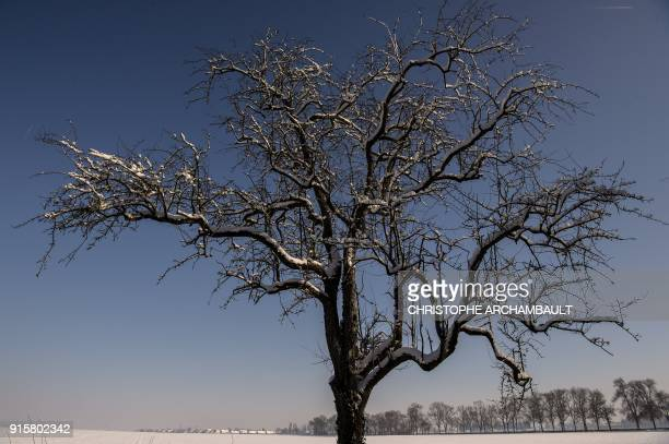 A snowcovered tree stands in a field outside Chevilly near Orleans some 120 km south of Paris on February 8 2018 / AFP PHOTO / CHRISTOPHE ARCHAMBAULT