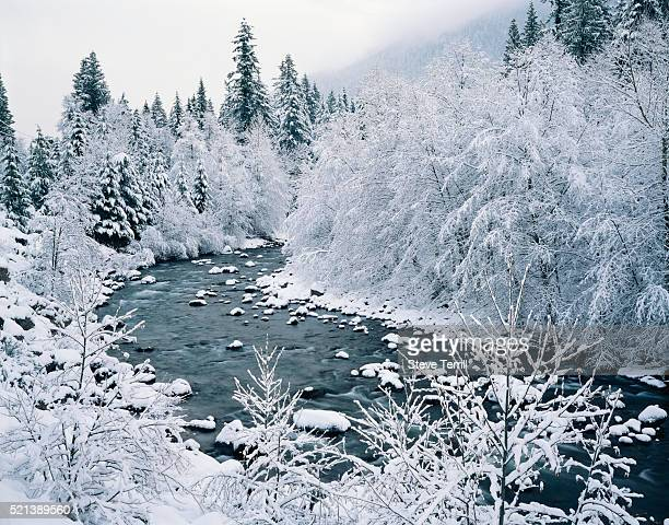 snow-covered trees along sandy river - mt hood national forest stock pictures, royalty-free photos & images