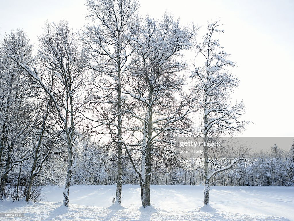 Snow-covered trees and landscape : Stock Photo