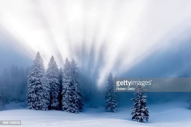 Snow-covered winter forest, with backlight, Ofterschwang, Oberallgaeu district, Bavaria, Germany
