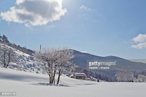 Snow-drift on trees and house on Daegwallyeong (famous travel destination) in Gangwon Province