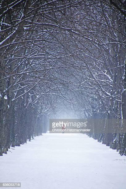 Snowed alley