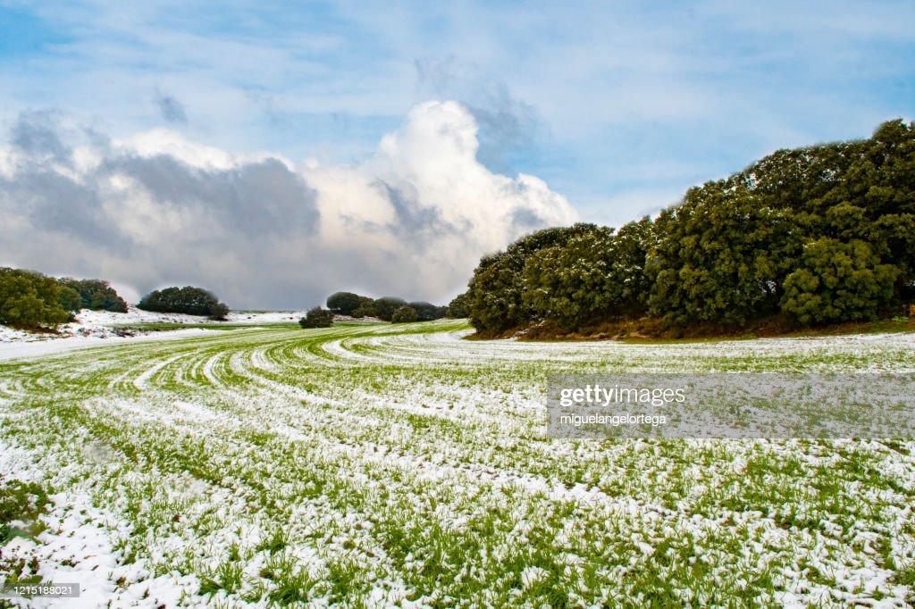 Snowed spring : Foto de stock