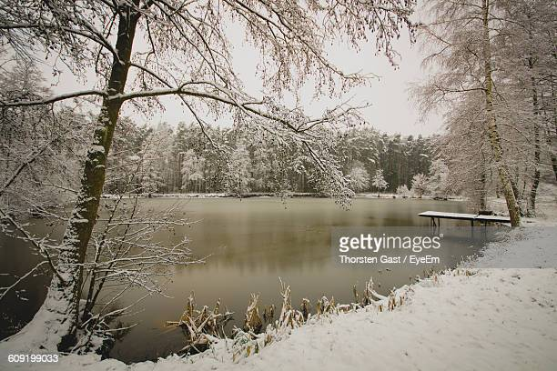 snowed trees by calm lake - erlangen stock photos and pictures