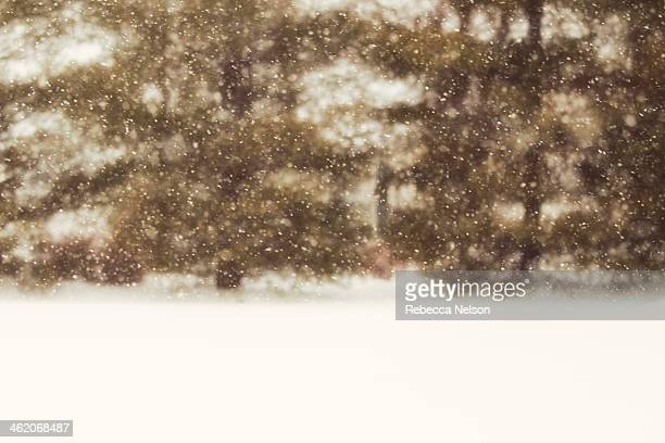 snowfall against evergreen trees - rebecca nelson stock pictures, royalty-free photos & images