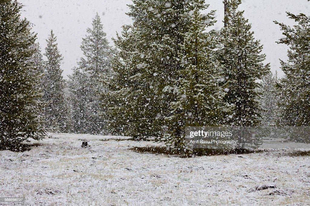Snowfall at moonlit night, Wyoming : Stock Photo