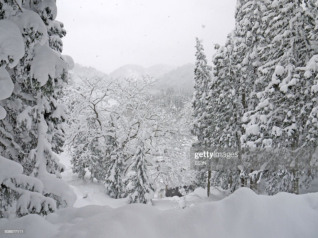 Snowfall in a Winter forest : Stockfoto
