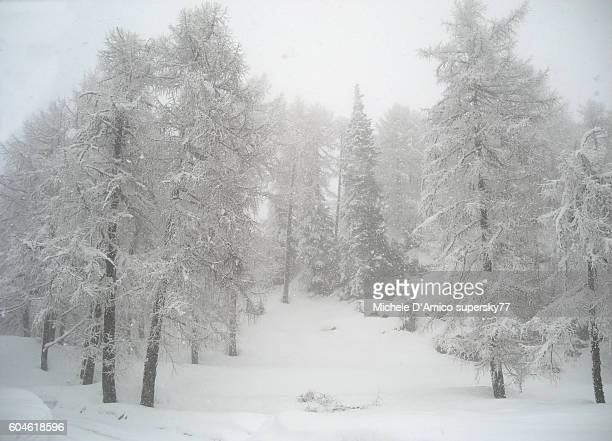Snowfall in the larch forest