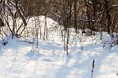 snowfall winter season white fluffy cold