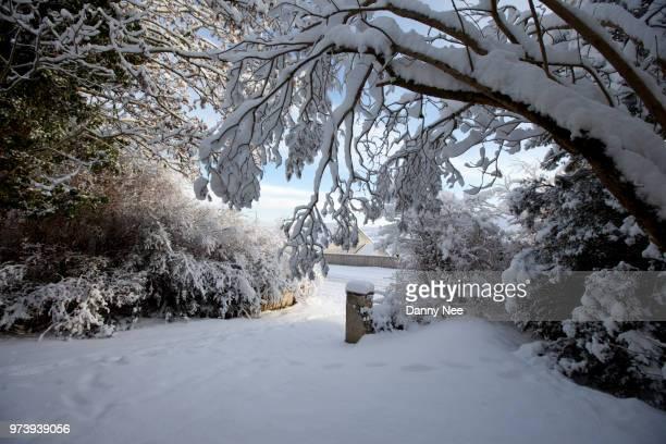 snowfall - nee nee fotografías e imágenes de stock