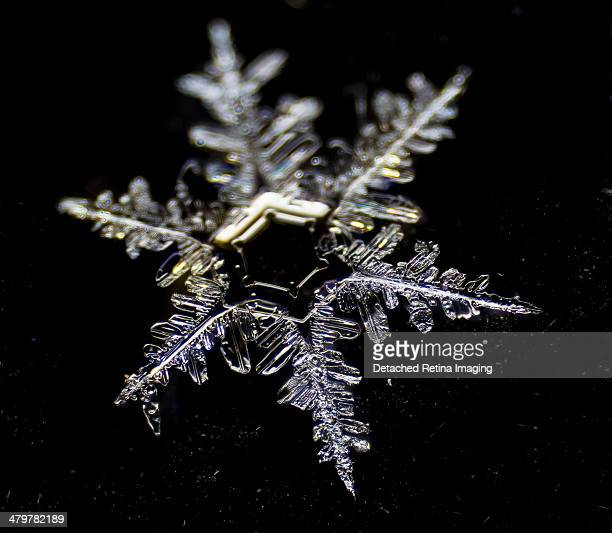 snowflake detail dendritic - snowflakes stock photos and pictures