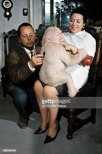 Snowflake The Albino Gorilla En mai 1967 portrait d'un gorille blanc albinos sur les genoux d'une femme un homme le caressant