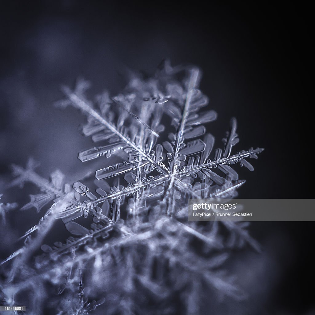 Snowflakes : Stock Photo