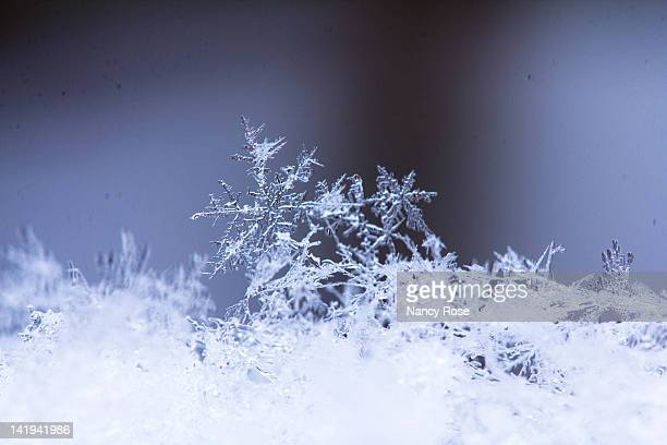 snowflakes up close - snowflakes stock photos and pictures