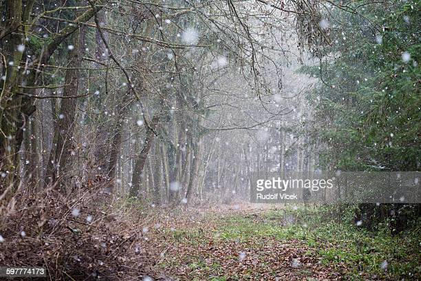 snowing in forest, one hunter standing in distance - czech hunters stock-fotos und bilder