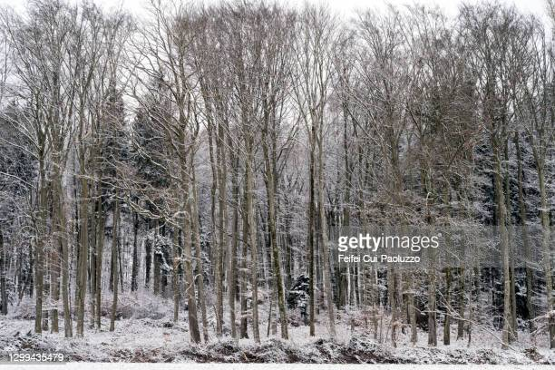 snowing weather and tree at epsach, switzerland - bare tree stock pictures, royalty-free photos & images
