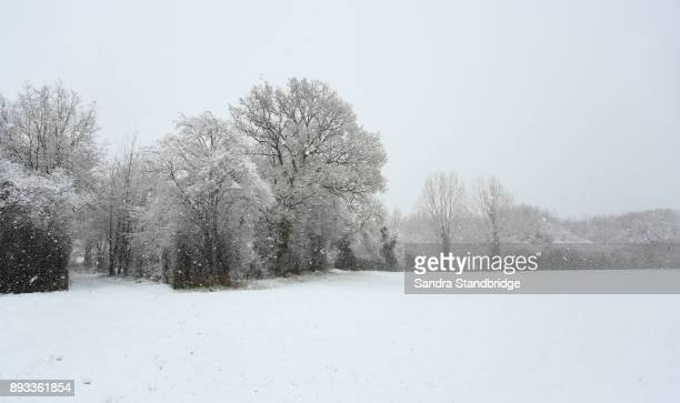 a snowing winters countryside landscape in hertford, uk. - hertford hertfordshire stock pictures, royalty-free photos & images