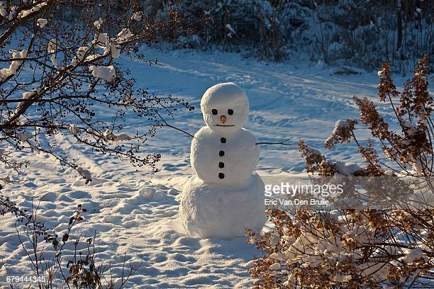 snowman surrounded by tree branches - eric van den brulle imagens e fotografias de stock