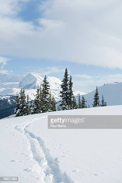 60 Top Snowmobile Tracks Pictures, Photos, & Images - Getty Images