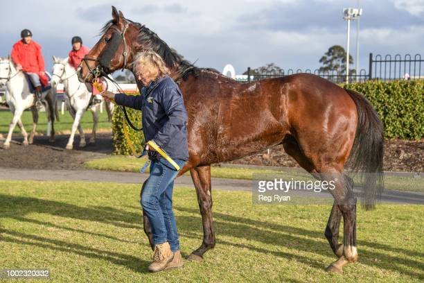 Snows Bro after winning the Sargeants Conveyancing Geelong BM58 Handicap at Geelong Synthetic Racecourse on July 20 2018 in Geelong Australia