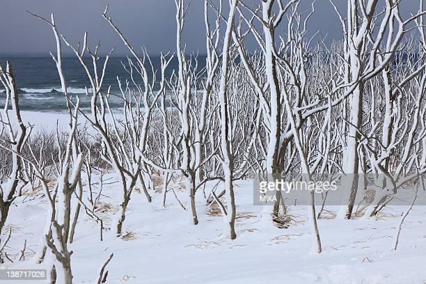 snowscape of tottori sand dunes, tottori, tottori, japan - 鳥取県 無人 ストックフォトと画像