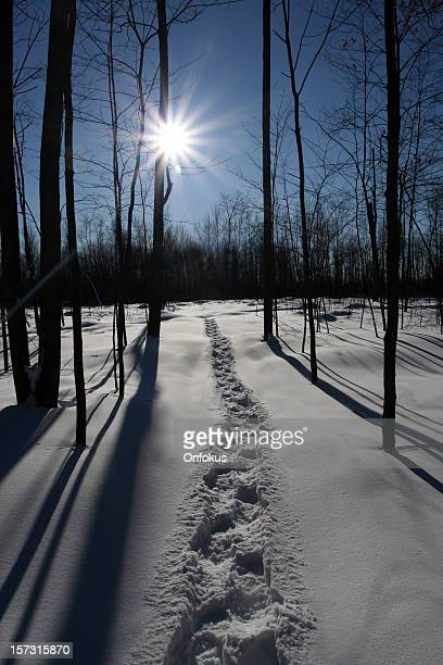 Snowshoe Trail in Fresh Powder Snow in the Forest