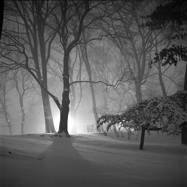 Snowstorm, Central Park