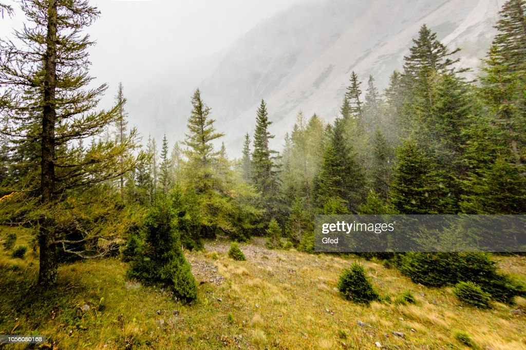 Tempesta di neve in autunno : Foto stock