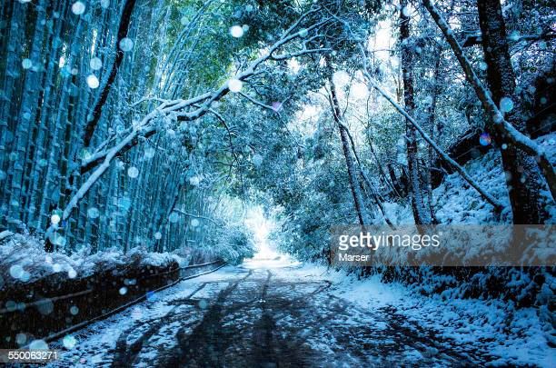 Snowstorm in the bamboo grove