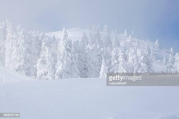 Snowstorm en las montañas