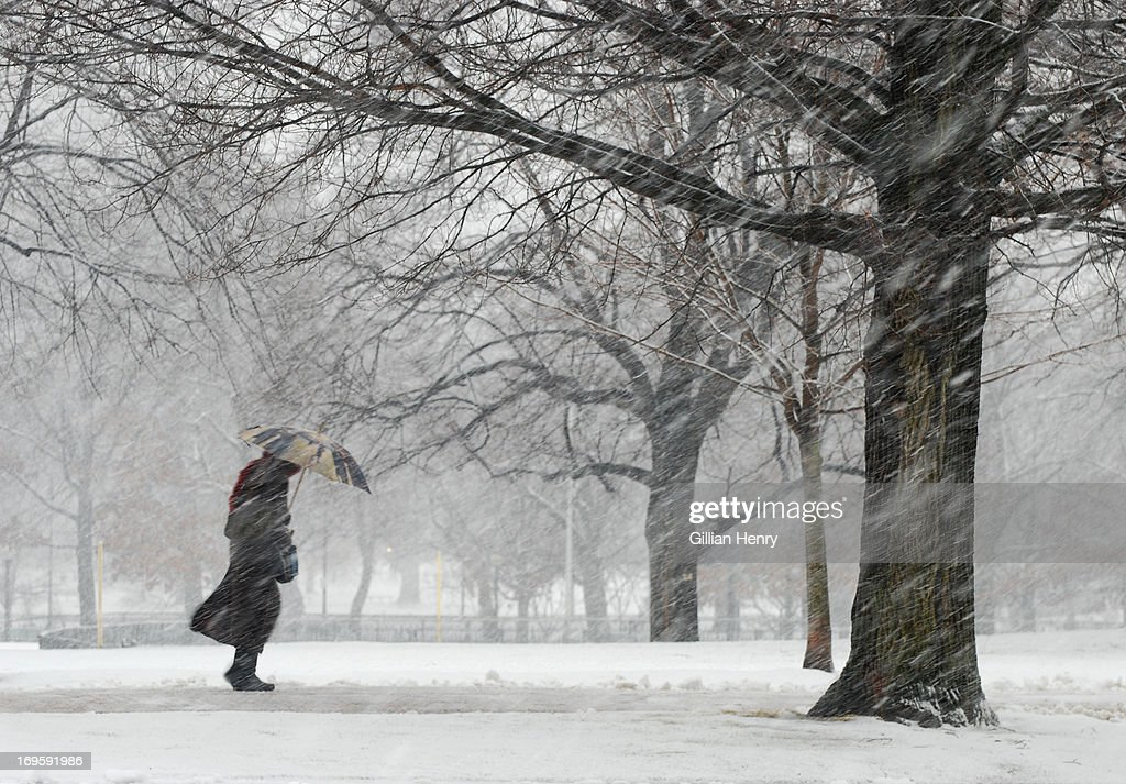 Snowstorm on Boston Common : Stock Photo