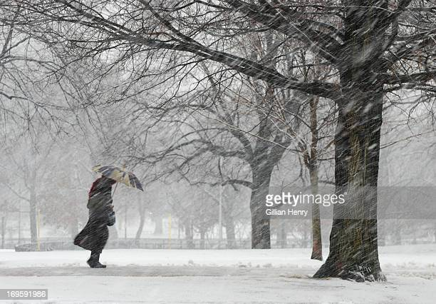 snowstorm on boston common - blizzard stock pictures, royalty-free photos & images