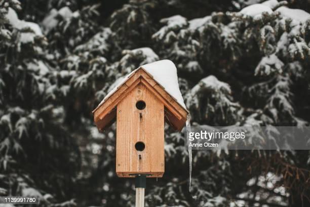 snowy birdhouse - vogelhäuschen stock-fotos und bilder