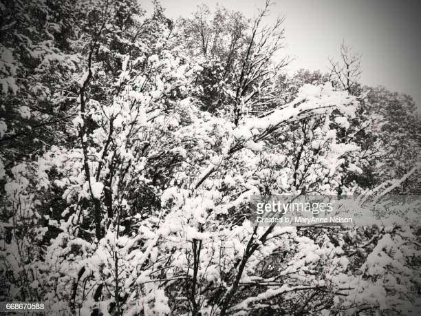snowy branches in black and white - mary moody fotografías e imágenes de stock