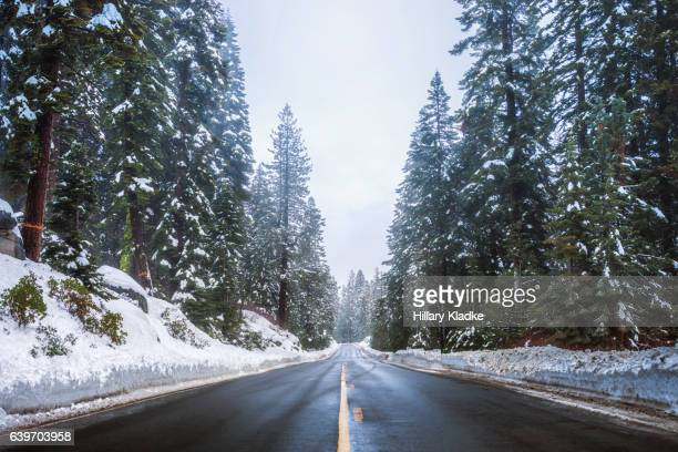 Snowy day on a road in Colorado