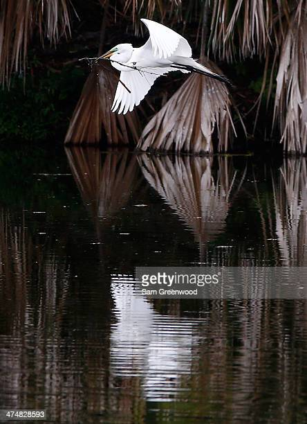 A snowy egret flies near the sixth hole during a practice round prior to The Honda Classic at PGA National Resort and Spa on February 25 2014 in Palm...