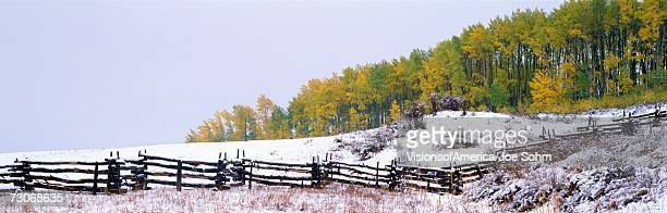 'Snowy fence and aspens near Ridgeway, Colorado'