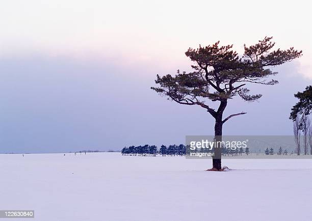Snowy Field and Tree