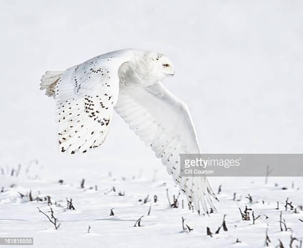Snowy Flight
