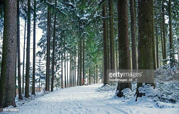 Forêt de neige en hiver