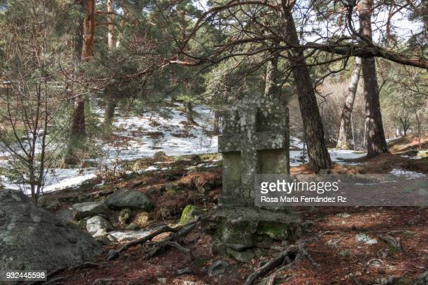 Snowy forest in winter with an anonymous tombstone on foreground . Guadarrama mountain range, Madrid, Spain.