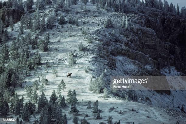 A snowy forest slope near Billings Montana