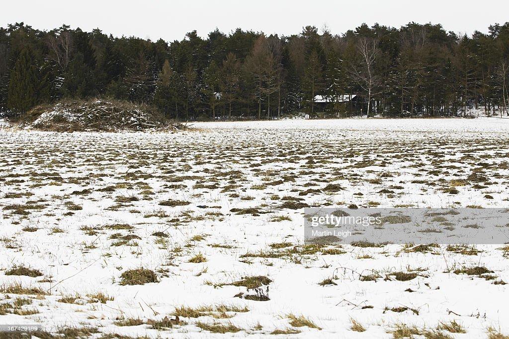 snowy frozen farmland : Foto de stock