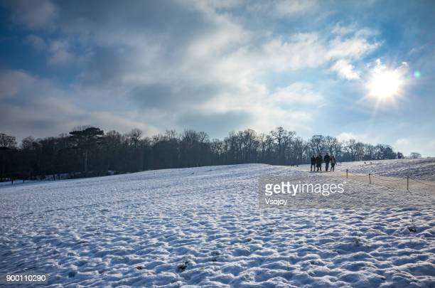 snowy hill on the way to the gloriette, vienna, austria - vsojoy stock pictures, royalty-free photos & images